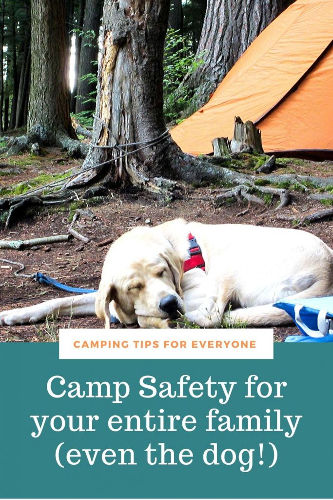 dog and camping tent. Camping safety tips.