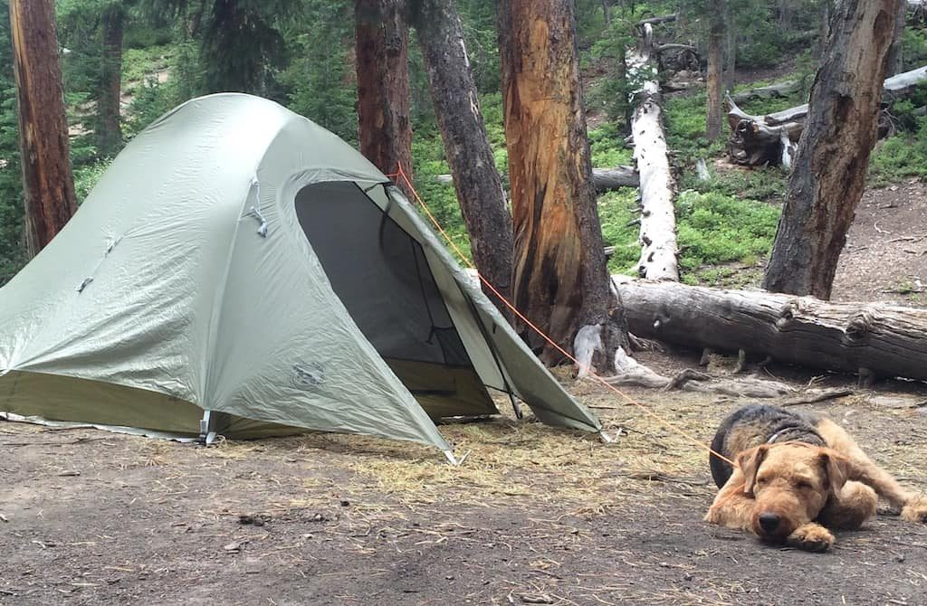 Dog sleeping near tent in Colorado backcountry