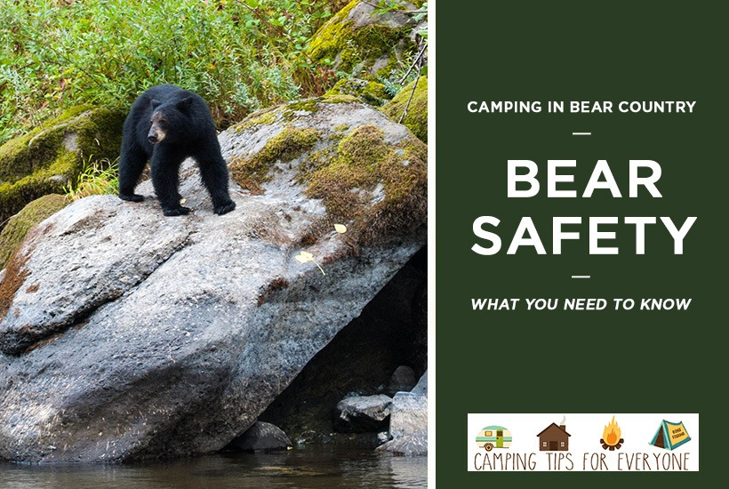 Bear Safety: What You Need to Know About Camping in Bear Country
